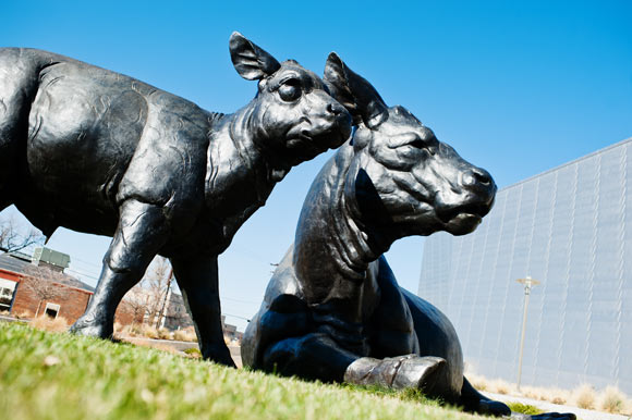 "The bronze sculpture ""Scottish Angus Cow and Calf"" sits outside the Denver Art Museum in the Golden Triangle."