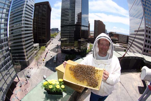 The Brown Palace Hotel has long operated five bee colonies on its roof.