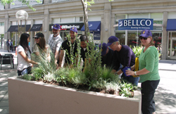 The Denver Downtown Partnership and the Denver Botanic Gardens partnered to create the Garden Block on the 16th Street Mall.