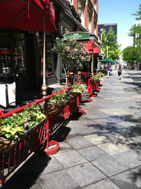 Flowers abloom on the 16th Street Mall.