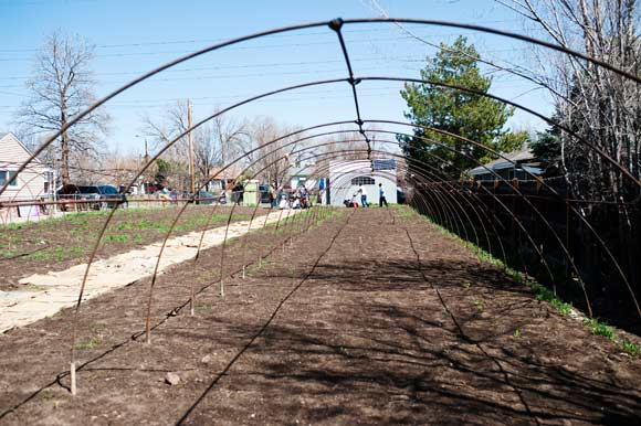 Winter crops will be planted under the hoop house.