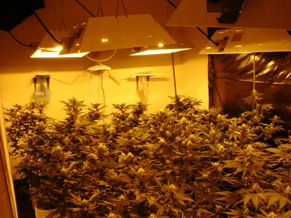 Led Grow Room Design