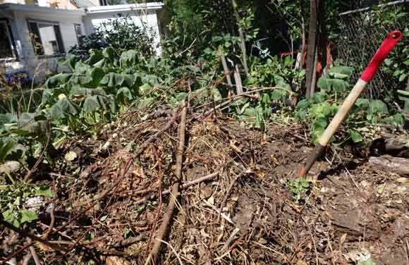 My eight-year-old compost pile in the Overland neighborhood.
