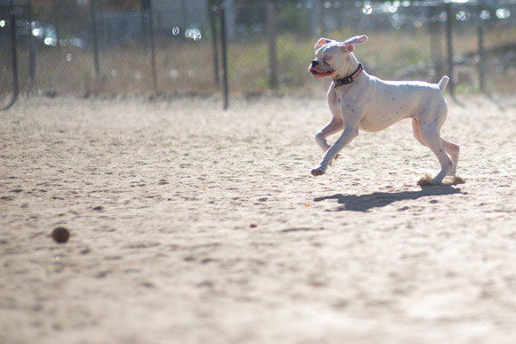 Denver is near the top of the list in the U.S. with 1.7 dog parks per 100,000 residents.