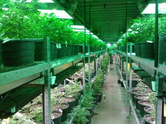 Grow rooms in Denver have sent the price of industrial real estate skyward.