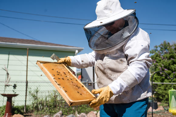 Crocetta began learning about honeybees in 2006.