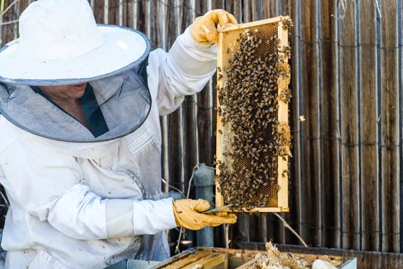 Beekeeper Shava Li Crocetta has about 25 hives she tends to in Denver.