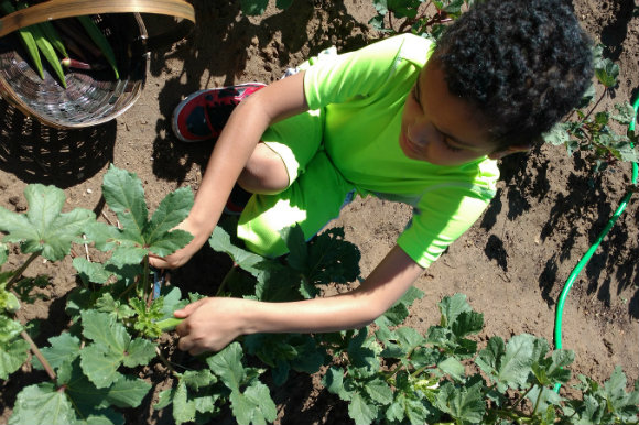 A child picks okra at the Urban Farm at United Church of Montbello.