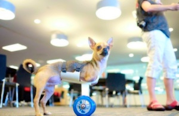 A 3D-printed cart allows Turbo to move.
